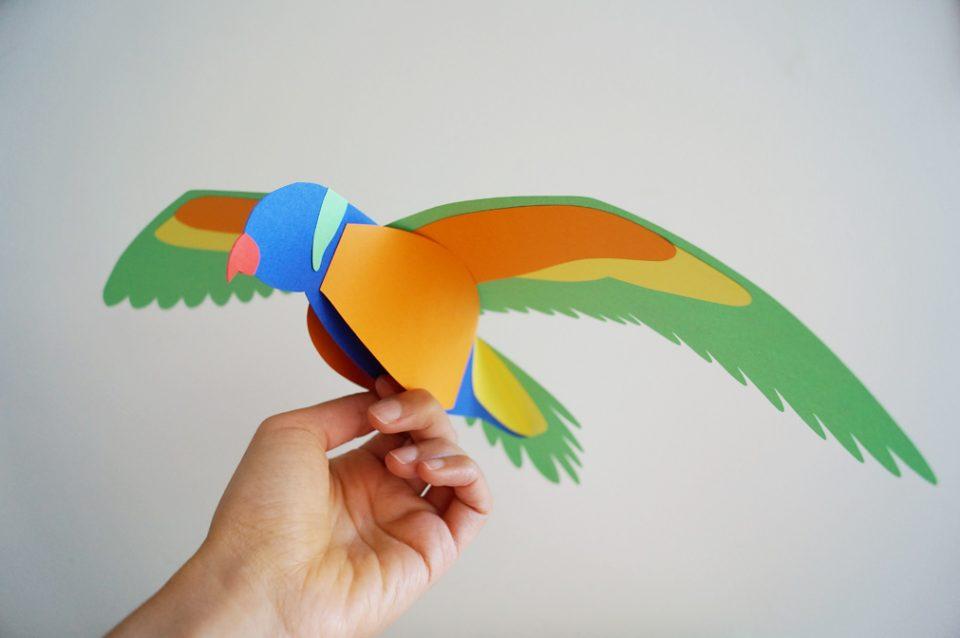 rainbow-lorikeet-coutroutsios4